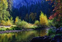 Fall Color Along the Merced River